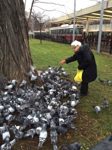 Ewa feeds the birds in front of Bathurst Station. The retiree, who wishes she could still work, occupies her time by caring for the pigeons and squirrels. MICHAEL CHACHURA/GLEANER NEWS