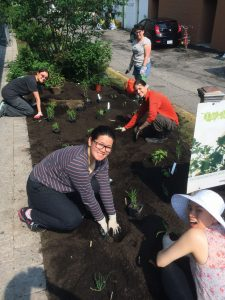 PICTURE COURTESY ©ERIN?MACDONALD/LEAF: Volunteers tend to LEAF's Urban Forest Demonstration Garden at the Markham Road entrance of Bathurst subway station.